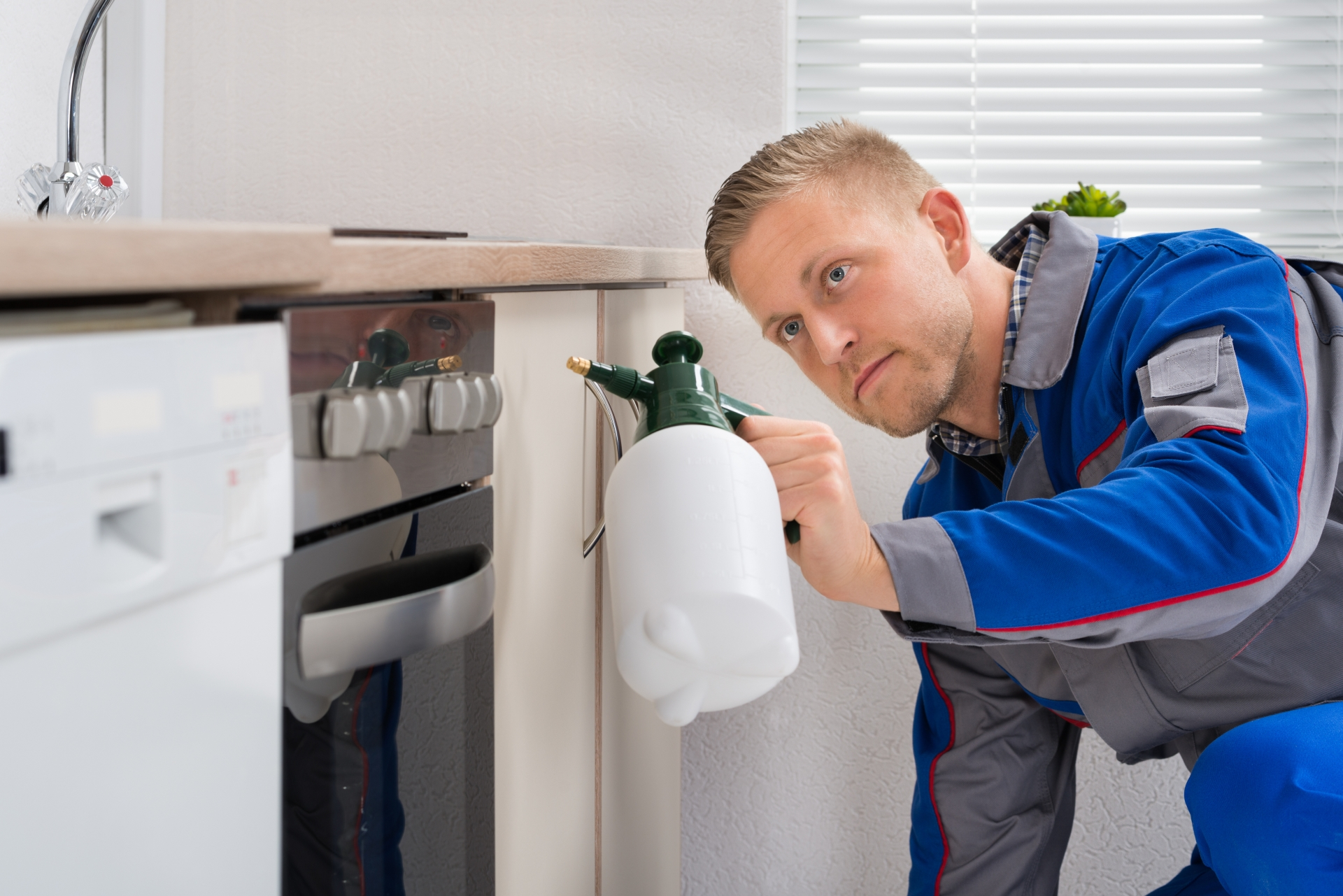 Pest Inspection, Pest Control in Barking, Creekmouth, IG11. Call Now 020 8166 9746